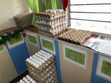 シリマン大学農学部で牛乳を買う(フィリピン親子留学)