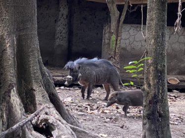 ドゥマゲテの動物園(シリマン・ユニバーシティ動物園)