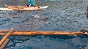 セブ島へジンベイザメを見に行こう!!フィリピン親子留学