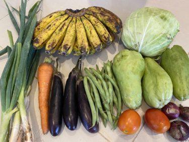 ドゥマゲテで野菜デリバリーを注文しました(フィリピン親子留学)